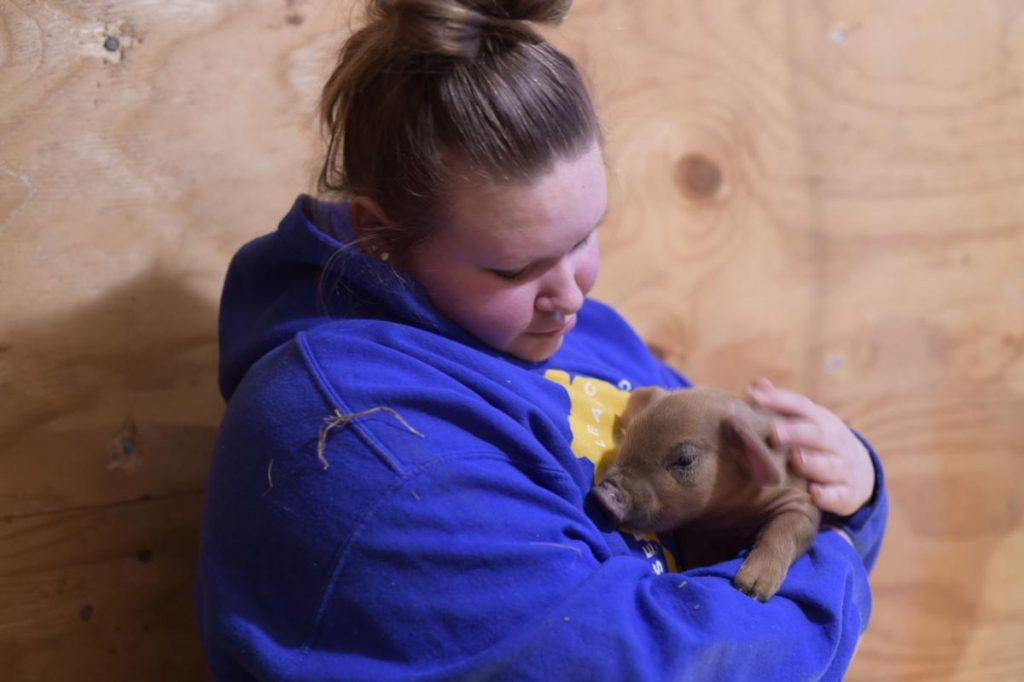 A Union Grove High School senior holds a piglet she helped to deliver.